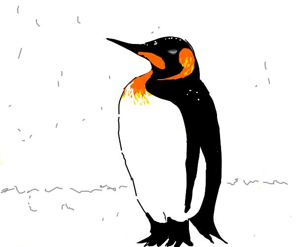 Golden Emperor Penguin