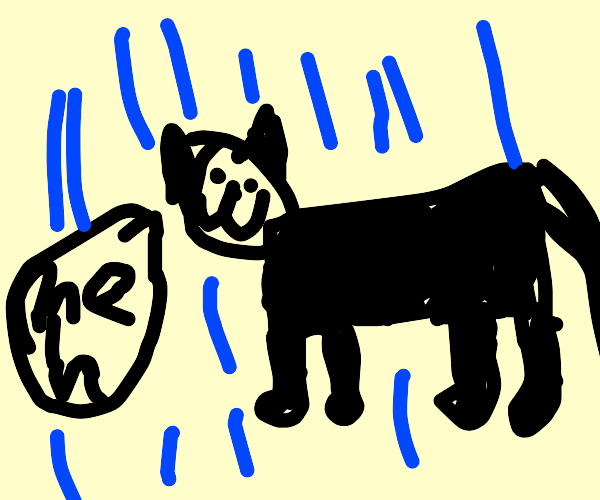 apathetic cat stands in the rain saying meh
