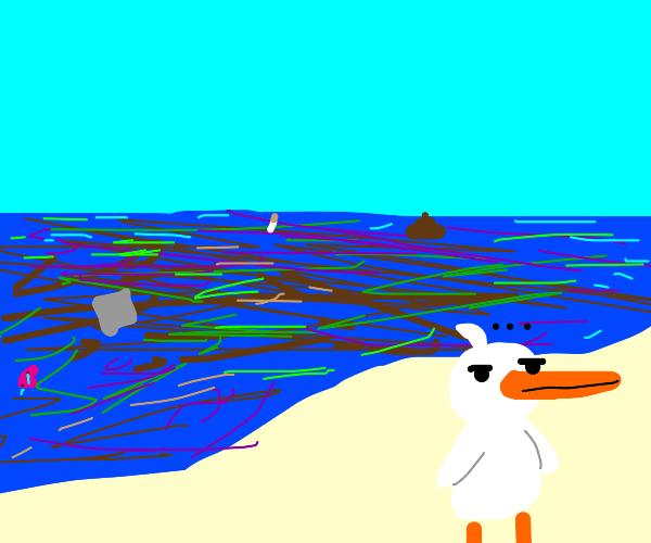 birds ignore polluted ocean
