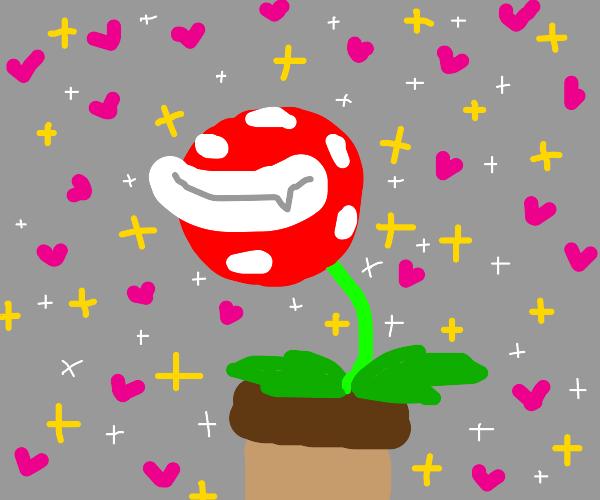 Happy valentine's day plant