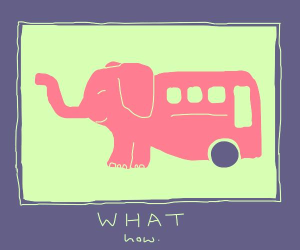 "old meme frame. elefant bus. ""what how""."