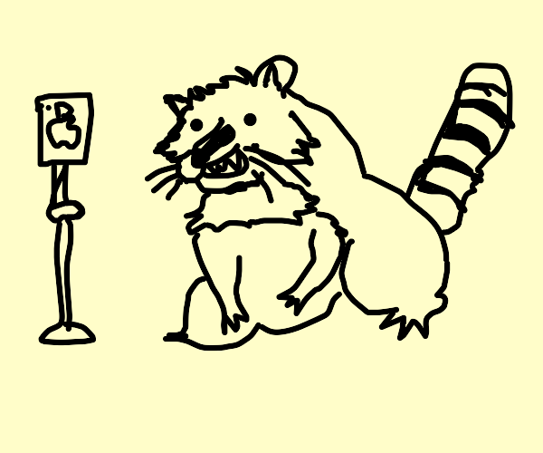 Raccoon making a TikTok