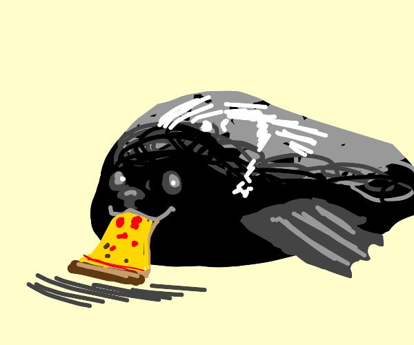 seal eats pizza