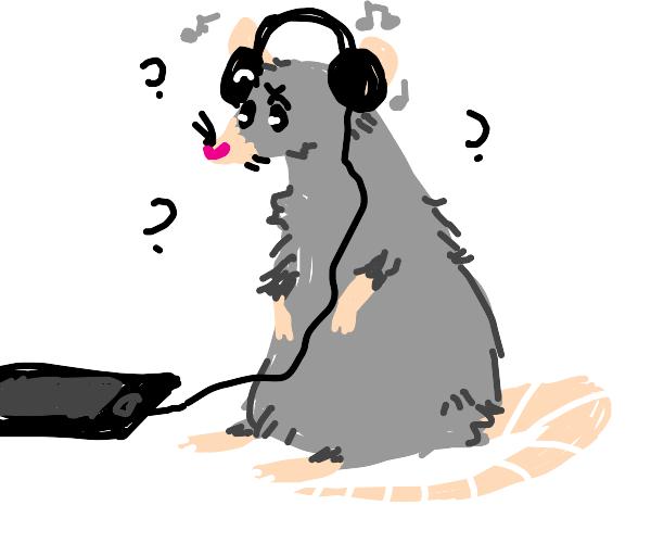 Rat confused by headphones