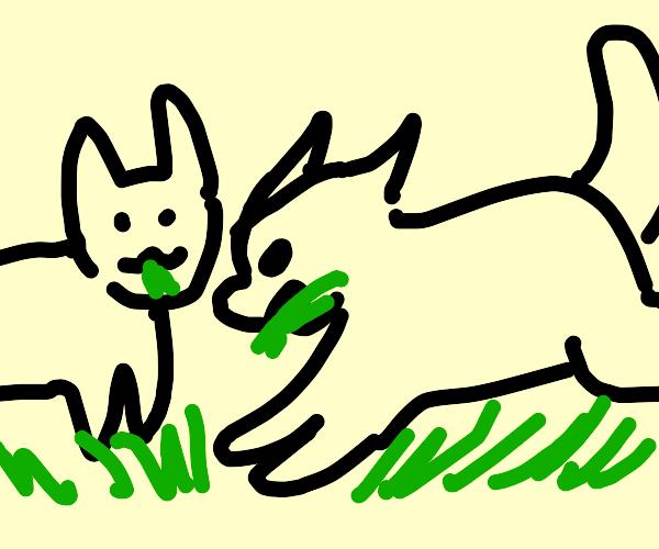 Cats grazing