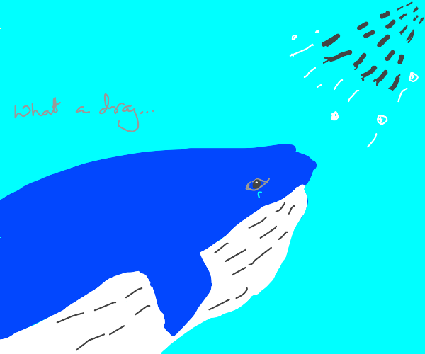 A whale that's sad about the daily grind
