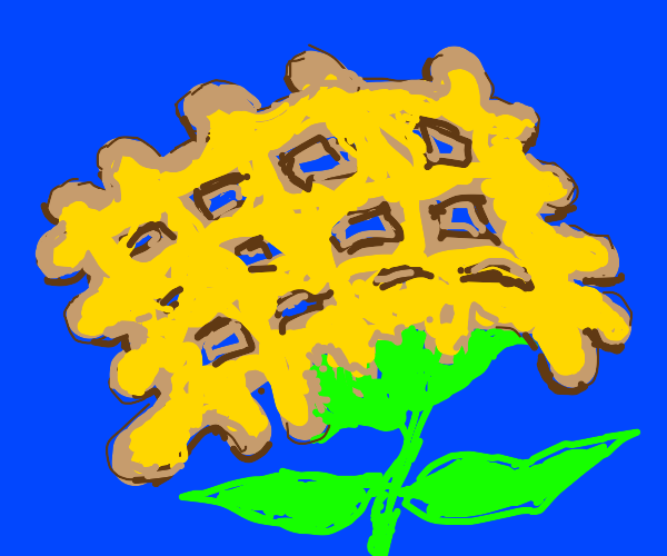 Flower look like waffle with yellow petals