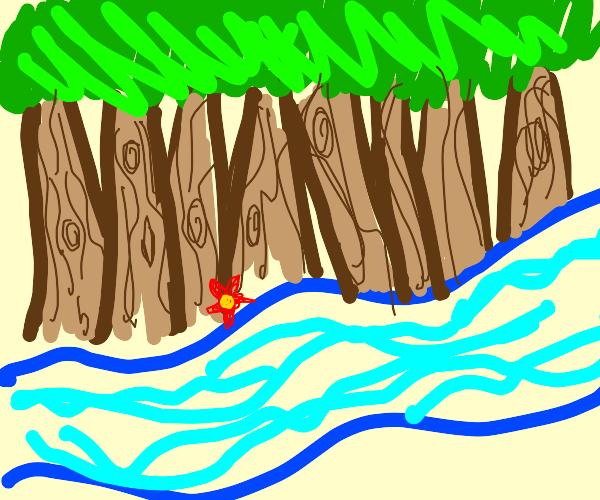 a jungle river