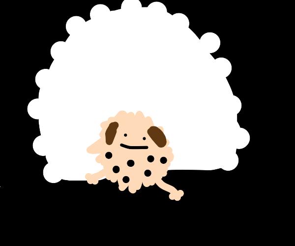 A very fluffy light brown dog