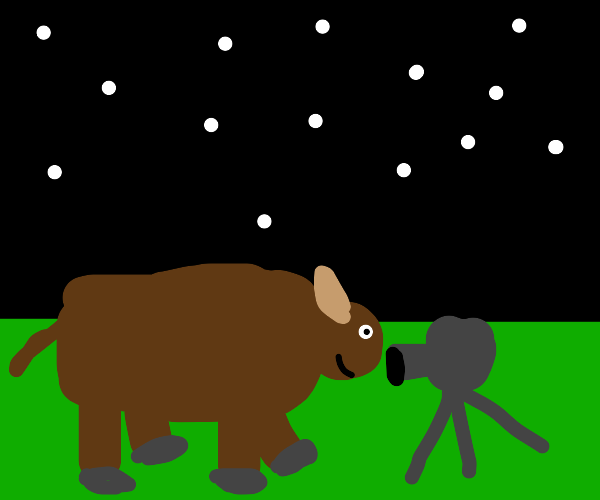 Buffalo Takes Photo Using The Camera's Flash