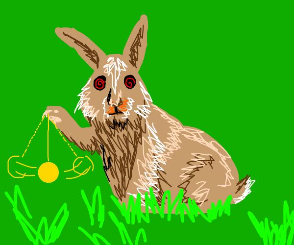 rabbit tries to hypnotize you