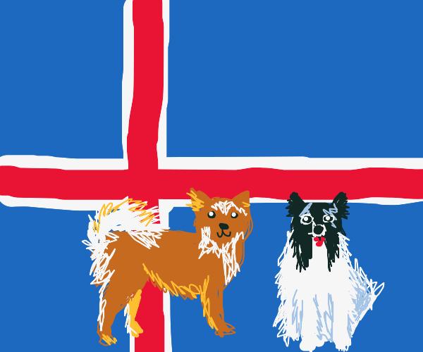 Icelandic Dogs