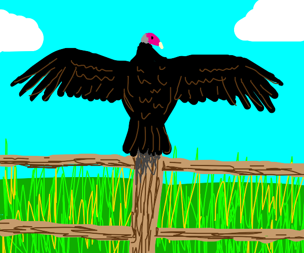 A buzzard stands on a post with wings spread