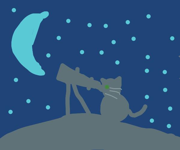 cat using telescope