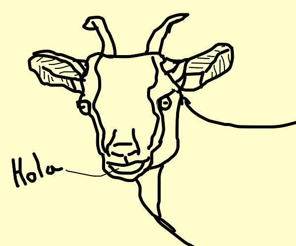 Spanish goat