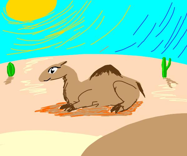 cute dromedary sitting down on desert