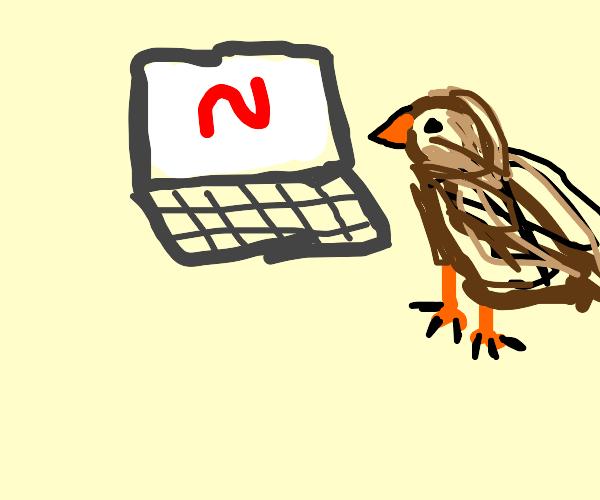 Hawk watching netflix on a computer