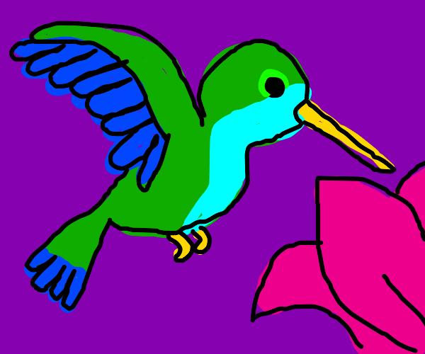 Blue and Green Hummingbird