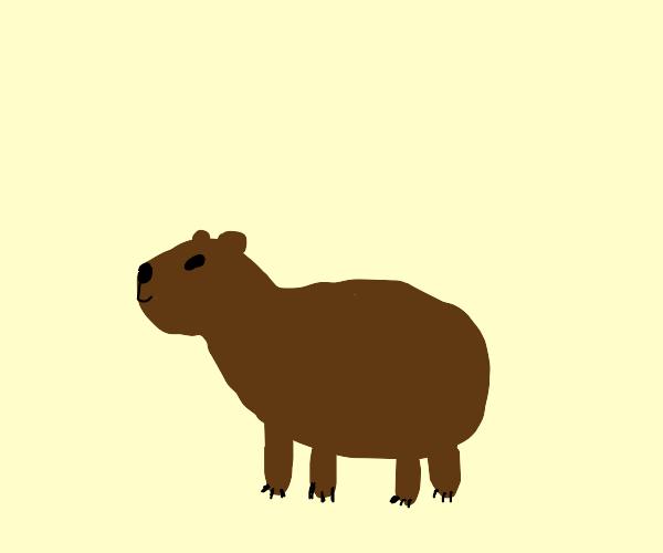 Eclectic Capybara