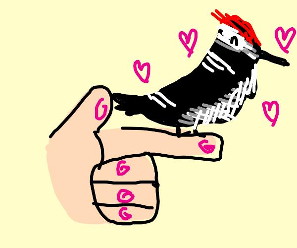 Pet Woodpecker