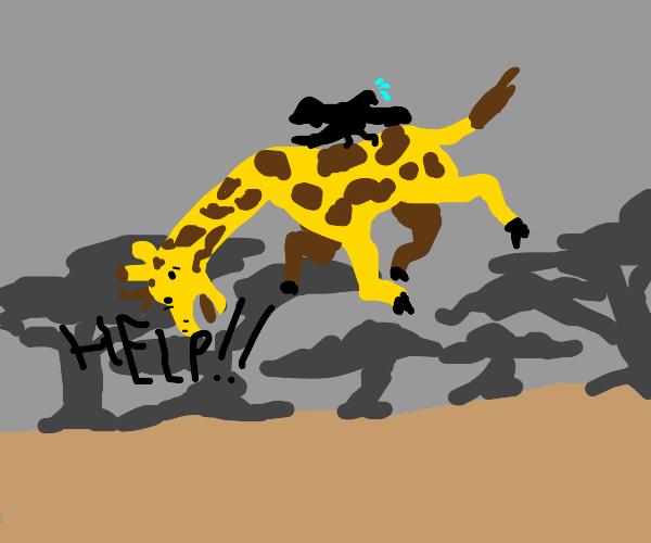 Bird carries away a screaming giraffe