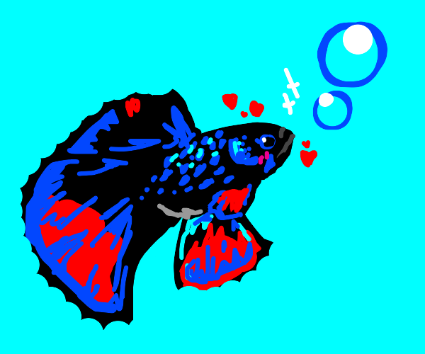 Handsome fish