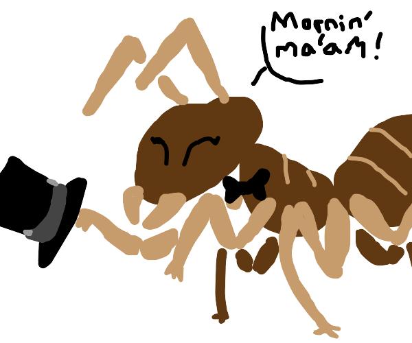 gentleman ant