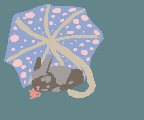 Rabbit under umbrella eating