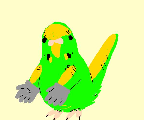 Parakeet wearing Gloves