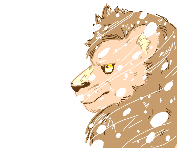 Lion in a Blizzard