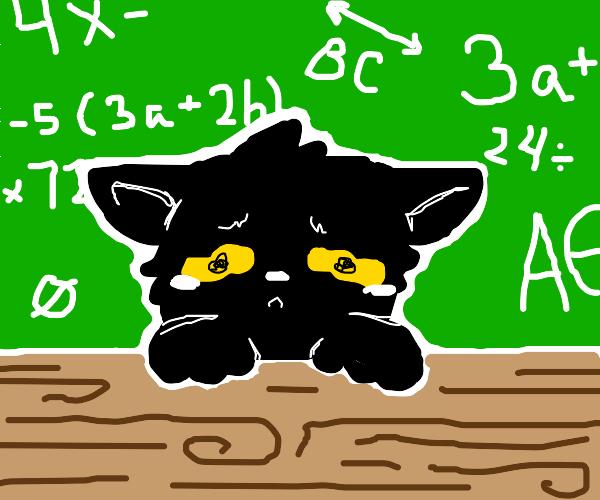 Sad cat in school