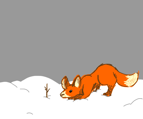 fox with big ears looks at an upright stick