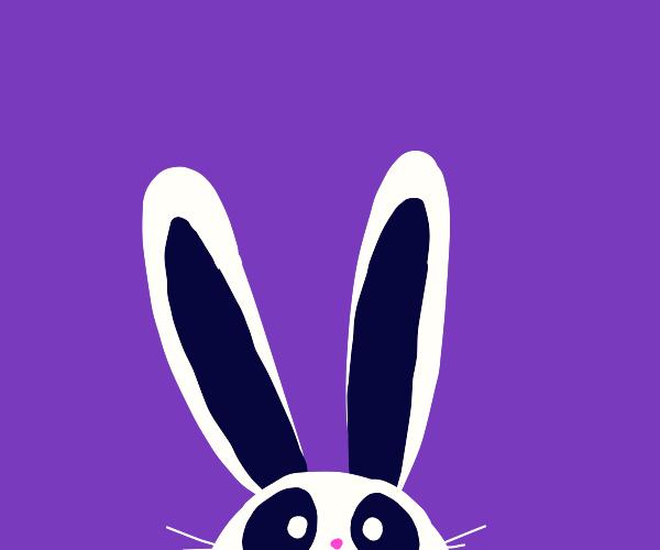 Panda with rabbit ears