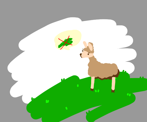 llama does not enjoy grass eating