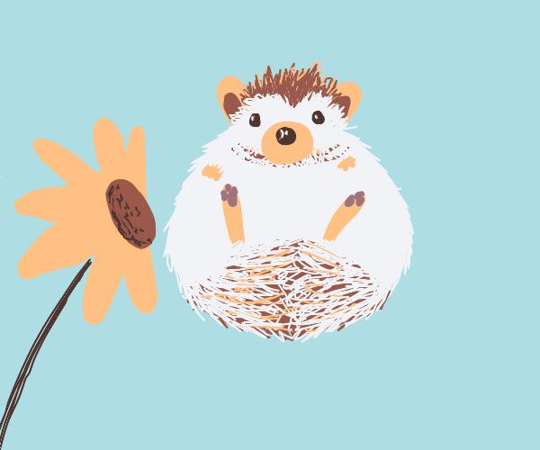 hedgehog with flower