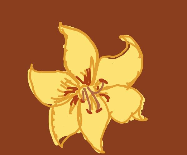 A belladonna flower