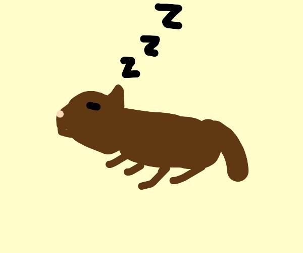 a cat dreaming