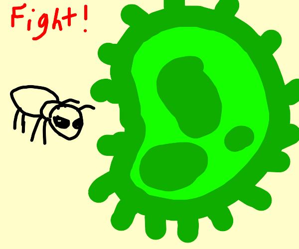 Ant vs giant bacteria