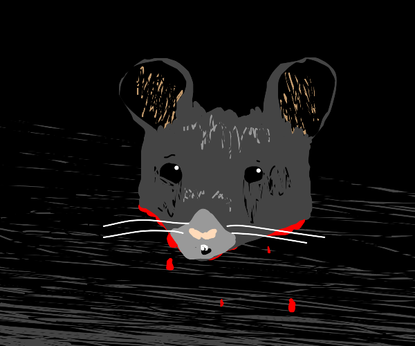 Head of a mouse
