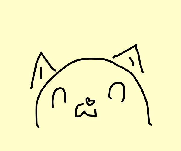 cute cat :3