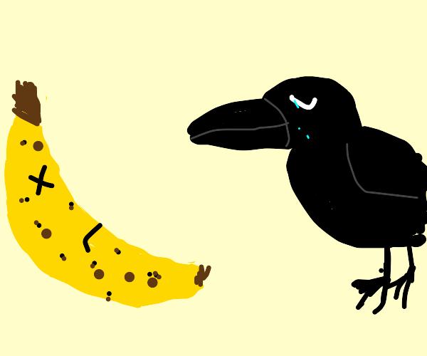 sad crow mourning death of banana friend