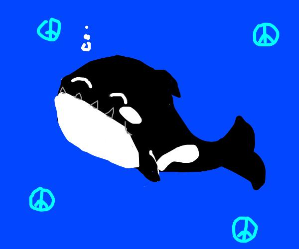 Peaceful Orca
