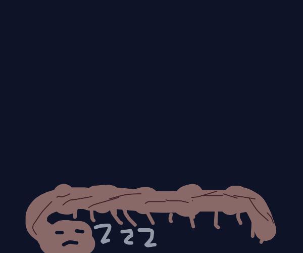 sleeping many legged worm