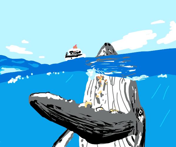 Whale disguises as a island