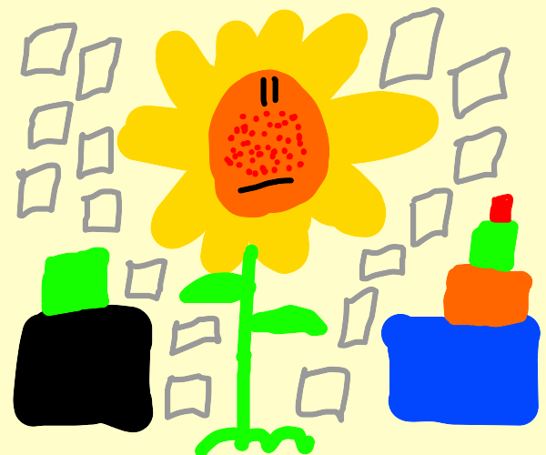 Sunflower with squares