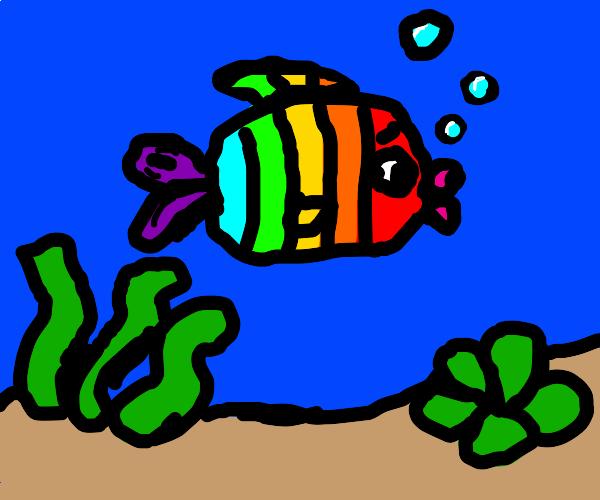 Sad Rainbpw Fish