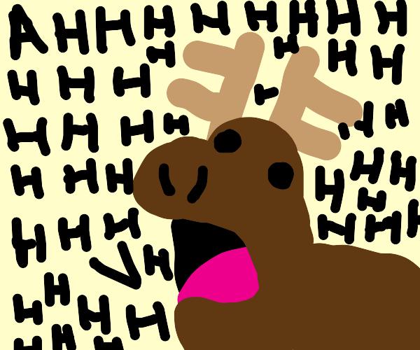 Moose Screaming