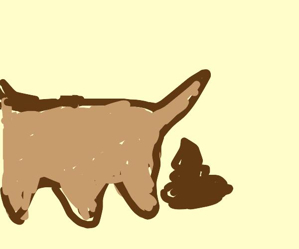Dog popo