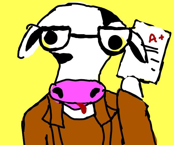 a nerdy cow