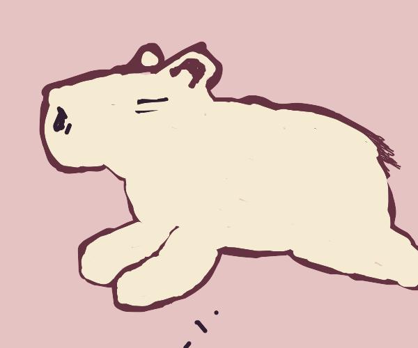 Sleeping Capybara